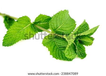 Closeup of fresh home-grown mint leaves isolated - stock photo