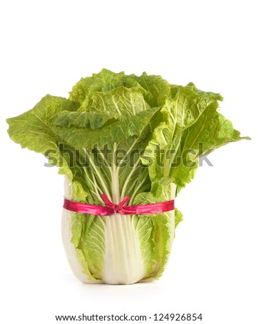 Closeup of Fresh Napa Cabbage from the Farm Fields on white background.  A Healthy Low Fat and Low Carbohydrate Food