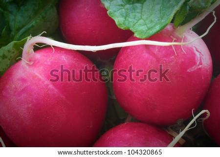 Closeup of fresh radishes - stock photo
