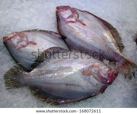 closeup of fresh raw fish in ice on sea market table