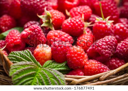 Closeup of freshly picked raspberries in the basket