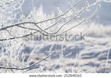 closeup of frost on  tree branch on sunny winter morning - stock photo