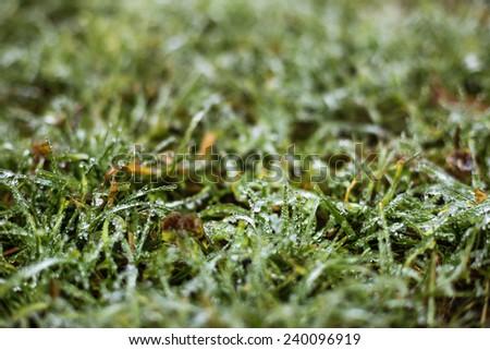 Closeup of frozen grass blades  - stock photo