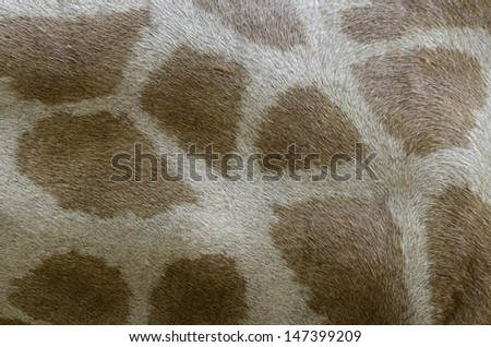 Closeup of Giraffe' skin with nice pattern for background and graphic job - stock photo