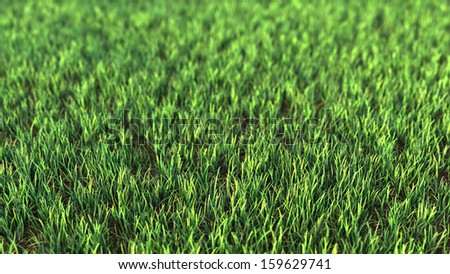 Closeup of grass field. Fresh green grass with strong blur Great for ecology background. - stock photo
