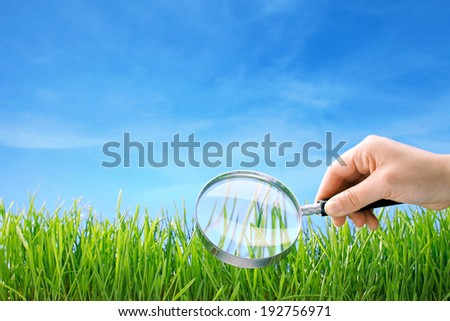 closeup of grass under magnifying glass - stock photo
