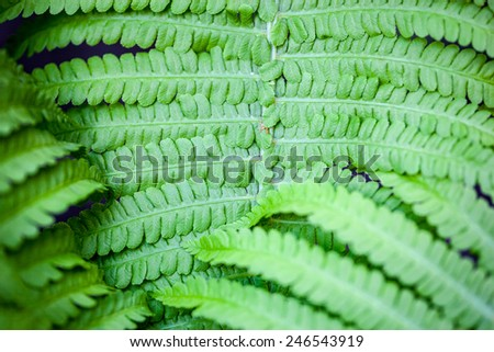 Closeup of green fern stem and leaves - stock photo