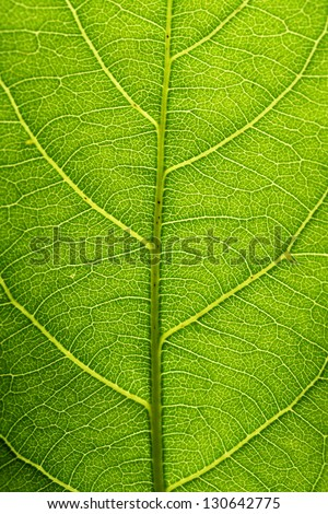 Closeup of green leaf veins - stock photo