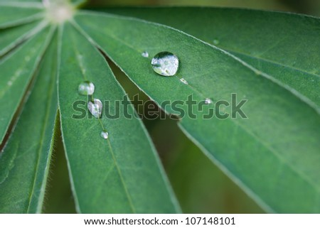 Closeup of green leaf with water drops - stock photo