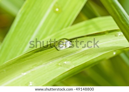 Closeup of green leaf with water drops ,
