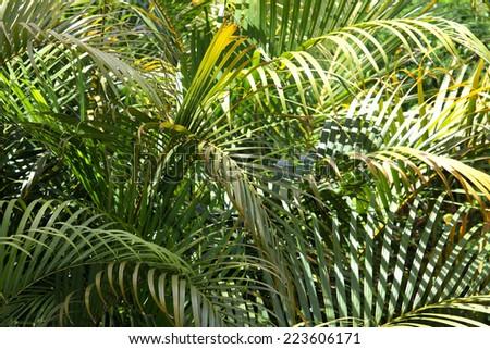 closeup of green palm trees, queensland, australia - stock photo