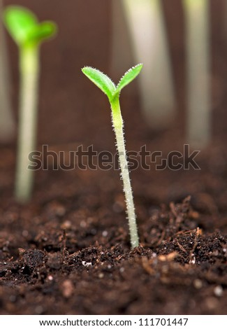 Closeup of green seedling growing out of soil
