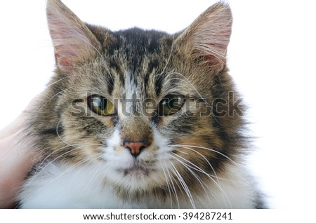 Closeup of Grey and White Tabby Cat's Face While Being Petted - stock photo