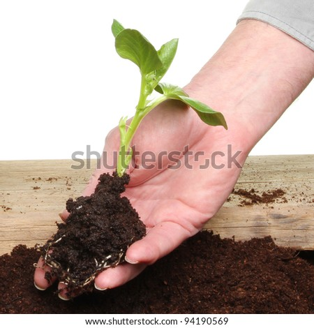 Closeup of hand holding a seedling in soil - stock photo