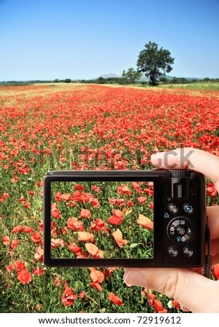 Closeup of hand holding photo camera capturing picture of rural scene - red summer poppy field