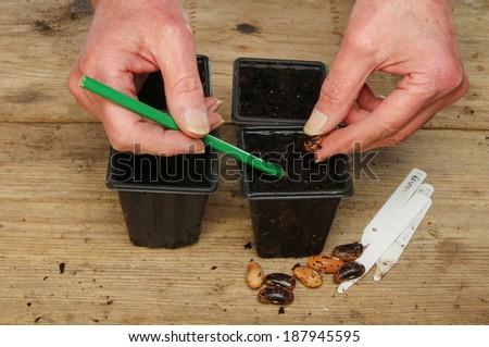 Beans Plant Planting Runner Bean Seeds
