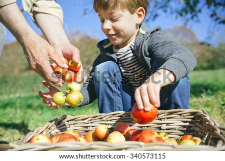 Closeup of happy cute kid and senior man hands putting fresh organic apples in wicker basket with fruit harvest. Focus on man hands.  - stock photo