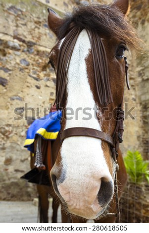 Closeup of horses and mares - stock photo
