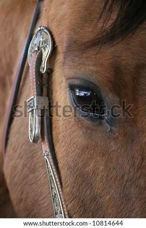 Closeup of horses eye and silver on bridle - stock photo