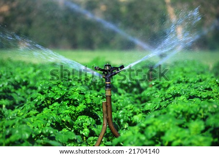 Closeup of irrigation system in a healthy potato field - stock photo
