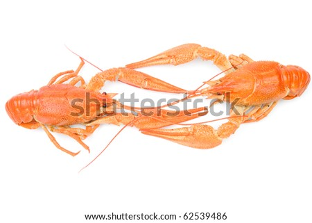 Closeup of isolated crayfish on white background