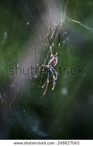 Closeup of large orb spider in queensland australia - stock photo