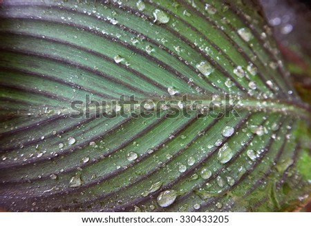 closeup of leaf with water droplets - stock photo