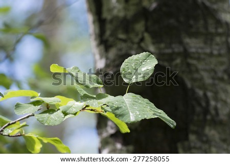 Closeup of leaves, Hecla Grindstone Provincial Park, Manitoba, Canada - stock photo
