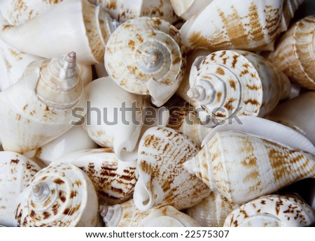 Closeup of lots of sea shells together - stock photo