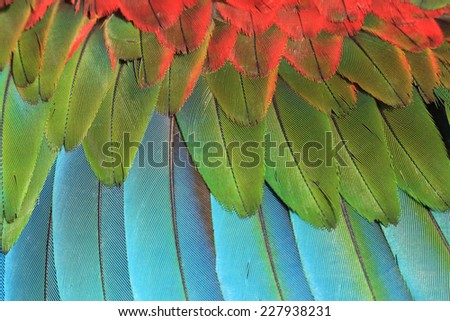 Closeup of macaw feathers, green winged macaw - stock photo