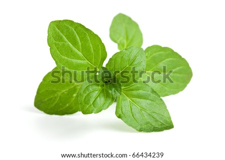 closeup of mint leaves on white background