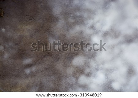 Closeup of mould growing on a food. - stock photo