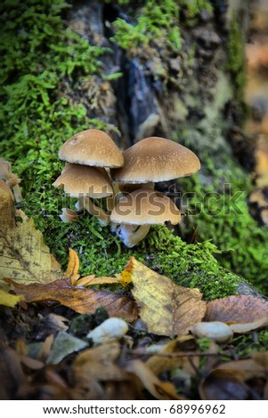 Closeup of mushroom growing in the forest. - stock photo
