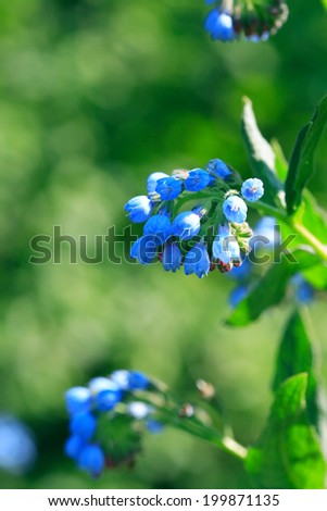 Closeup of nice blue wildflower on green background