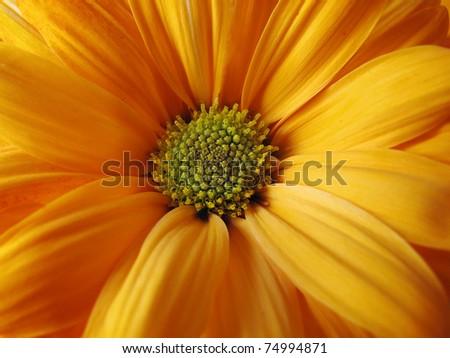 Closeup of orange flower - stock photo