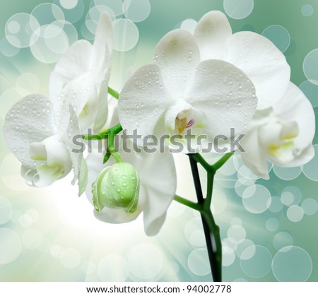 Closeup of orchid flower - stock photo