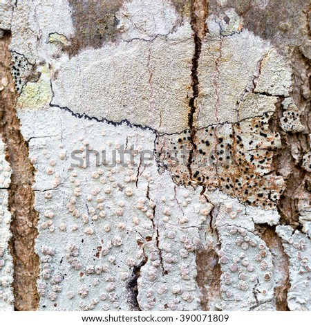 Closeup of patterns on tree bark. - stock photo