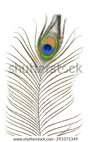 Closeup of peacock plume isolated on white background - stock photo