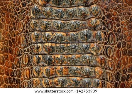 closeup of photo, crocodile skin - stock photo
