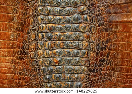 closeup of photo, crocodile skin - stock photo