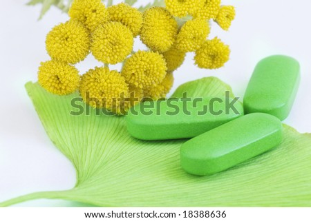Closeup of pills and fresh Ginkgo Biloba leaves and yellow tansy best suited for alternative medicine - stock photo