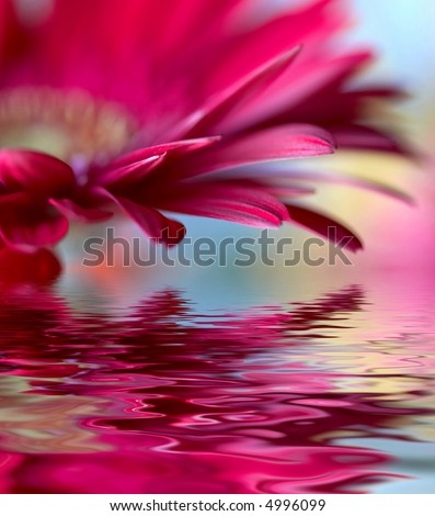 Closeup of pink daisy-gerbera with soft focus  reflected in the water - stock photo