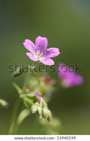 Closeup of pink flower in forest. Shallow focus depth on flower - stock photo