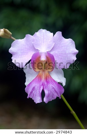 closeup of pink orchid - stock photo