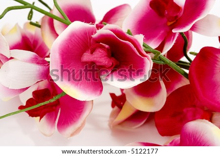 Closeup of pink orchids isolated on white background.