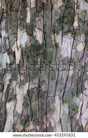 closeup of plane tree bark as a background - stock photo