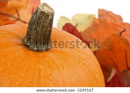 Closeup of  pumpkin with colorful leaves in  background.