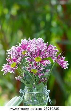 closeup of purple Chrysanthemum flower - stock photo