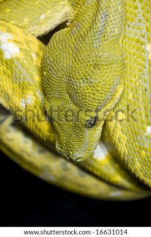 Closeup of Python - stock photo
