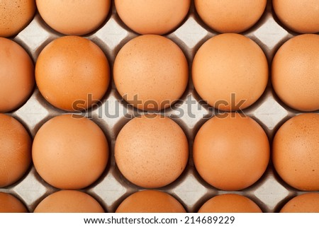 Closeup of raw chicken egg in a tray  - stock photo